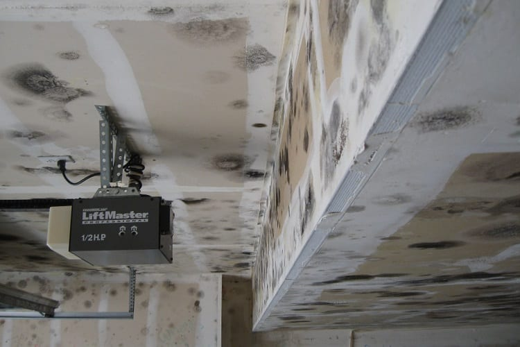 What's Causing Mold In Garage?